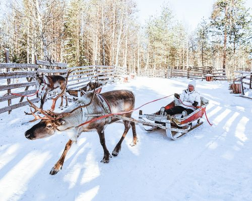 Girl in Reindeer sleigh in Finland in Lapland in winter.