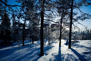 Winter landscape from Lapland Finland, selective focus