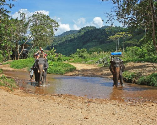 Trip on elephants in Khao Sok National Park. Southern Thailand.